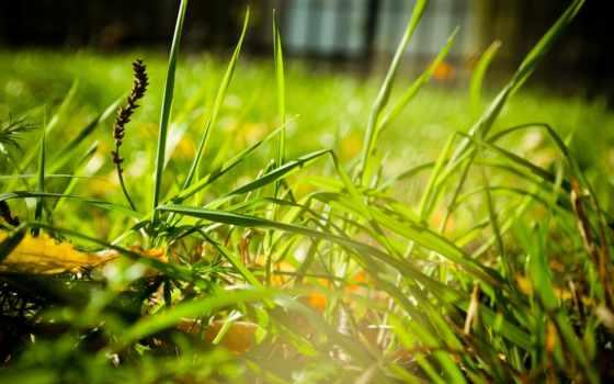 трава, пейзажи -, desktop, summer, free, дерево, снежинки, категории,