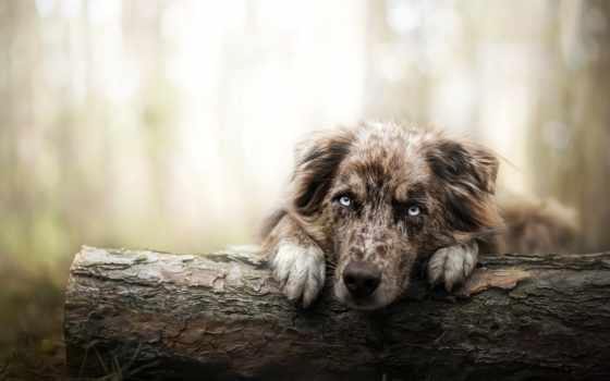 собака, summer, фон, fore, глаза, глаз, планшетный, одинокий