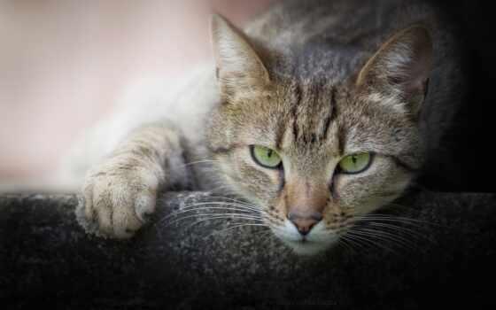 кот, взгляд, смотреть, морда, foot, id, глаза, short, котенок