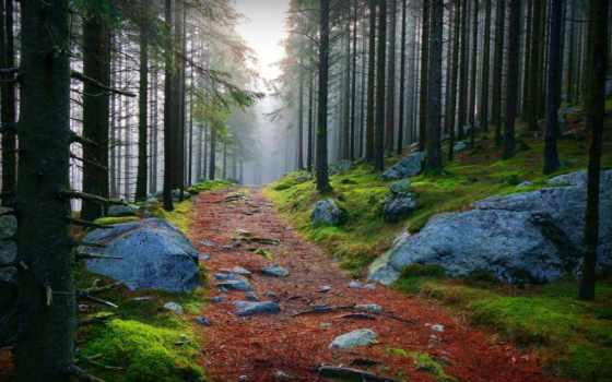 лес, камни