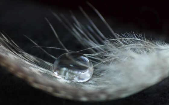 feather, войдите, зарегистрируйтесь