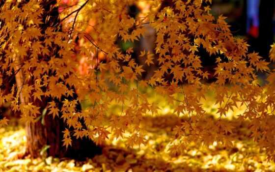 осень, природа, листья, деревья, золотая, свет,