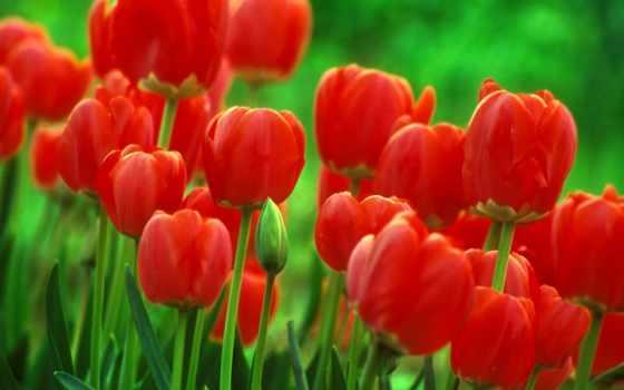 cvety, цветок