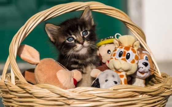котенок, home, корзина, длинношерстный, zhivotnye, sitting, toy, red,