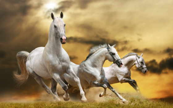 лошади, фотообои, белые, ани, лошадь, фотопанно, белых, трио, manufacture, фотообоев,