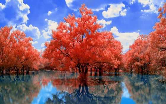 rboles, fotos, fondos, árbol, hoja, bosques, arboles, pantalla, los, hojas, otoño,