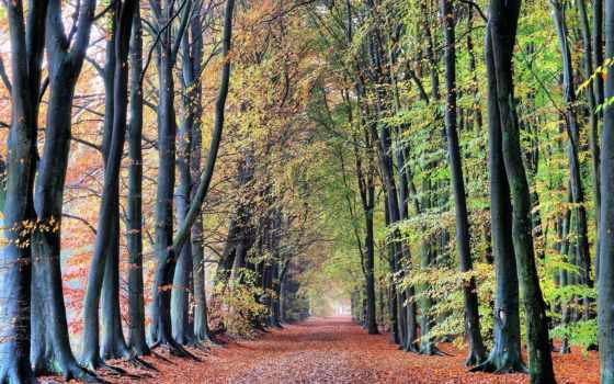 free, страница, листья,