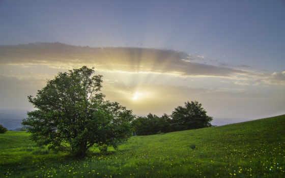 ecran, fonds, рассвет, arbre, туман, télécharger, qualité, fond, природа, жан,