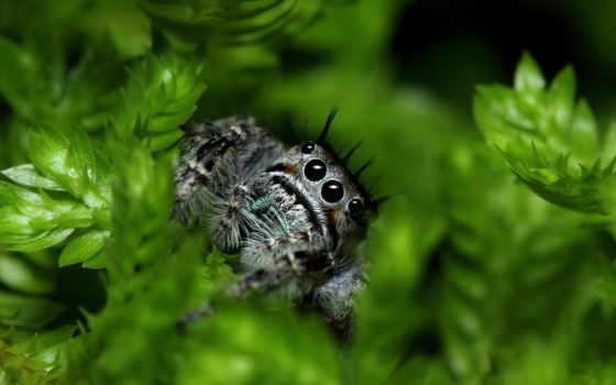 макро, tekkit, паук, широкоформатные, красивые, пауки,