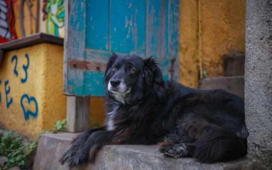 собака, retriever, animal, snout, дверь, urban, улица, annafaith, anje, плоский, марк