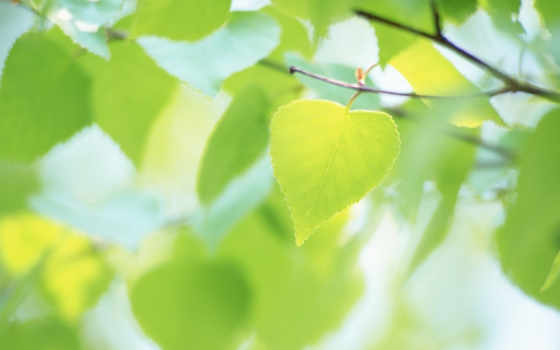 листочки, лето