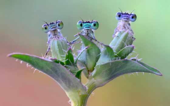 насекомые на веточке