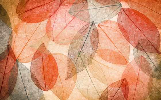 осень, фон, abstract, листья, stock, фото, листва, photos, colorful,
