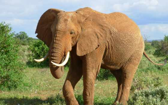 слон, animal, animals