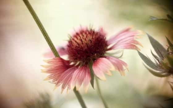 цветы, боке, изображение