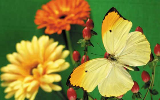 бабочка, кб, zhivotnye