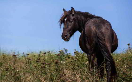 лошадь, морда, browse