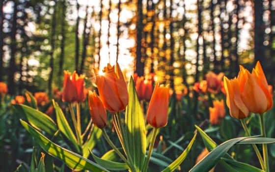 flowers, цветы, widescreen