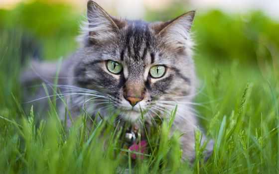 zhivotnye, кошки, кошек, но, кот, траву, едят, womanadvice,