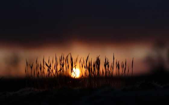 природа, sun, рассвет, травинки, гарантированно, место, рабочее, ваше, поднимут, настроение, свет,