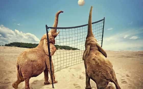 волейбол, pantalla, elefantes, dos, juegan, аль, спорт, волейбол, aliexpress, fondo,