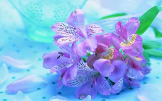 cvety, сеть, серия, поздравить, уважаемый, birth, день, февраль, user, коллекция
