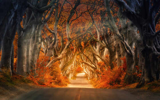 dark, дерево, hedge, ireland, дорога, который, northern, psihosomatik