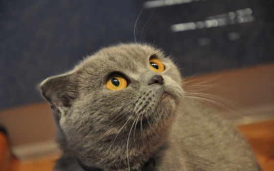 кот, begging, cats