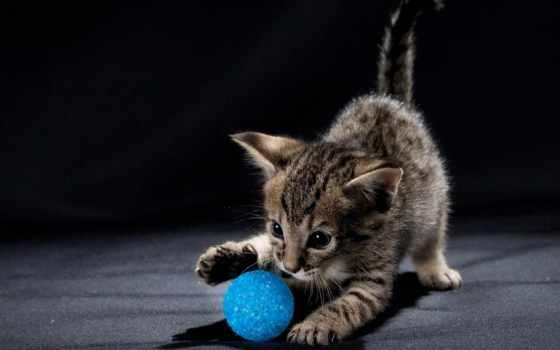 funny, cats, кот