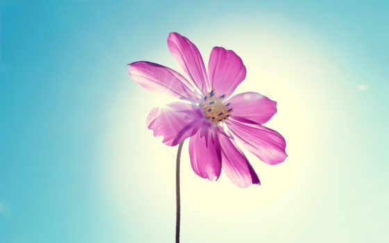 iphone, цветы, purple