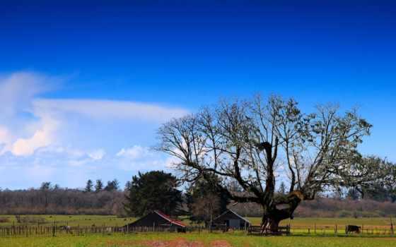природа, чистой, фермы, частной, натуральной, удаленной, природы, cosmos, графия, пейзажи -,