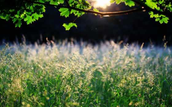 природа, sun, branch