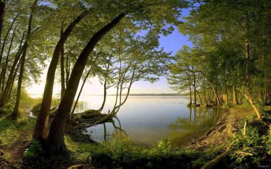 озера, озеро, trees, берегу, water, природа,