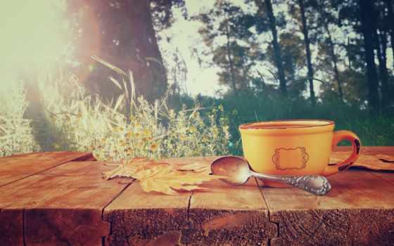 cup, осень, coffee, листья, фронтовой, со, изображение,