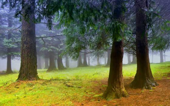 лес, туман Фон № 31996 разрешение 1920x1080