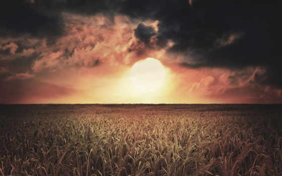 природа, поле, совершенно