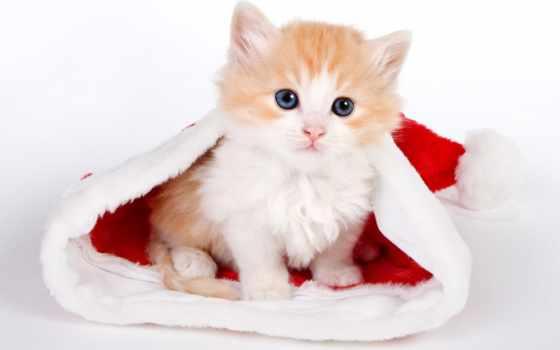 cute, santa, kitten