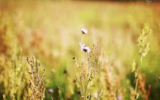 природа, категории, минимализм