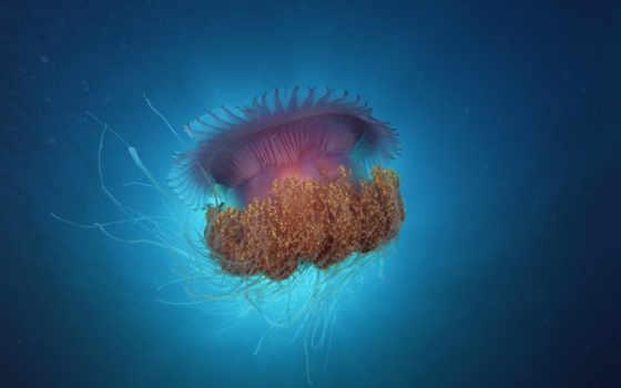 jellyfish, медузы, мохнатая, zhivotnye, underwater, морские, art, океане, синее,