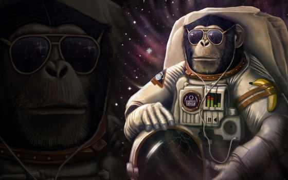 fondos, astronauta, pantalla, free, astronautas, mobile, шимпанзе, macaco,