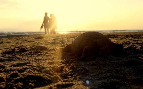 animal, пляж, artistic, пляжи,