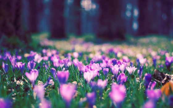 весна, cvety, ранняя