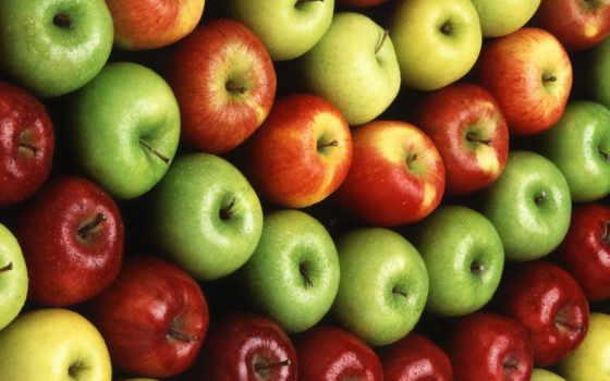 сорта, яблонь, яблони, саду, glad, зимние, сортов, яблок, яблоня,