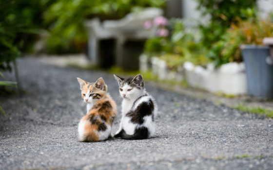 кошки, котята, лайков, дизлайков, чтоб, оставить, рыси,