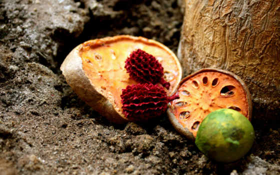плоды, земля