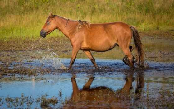 water, лошади, лошадь