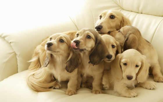 собаки, thank, марта