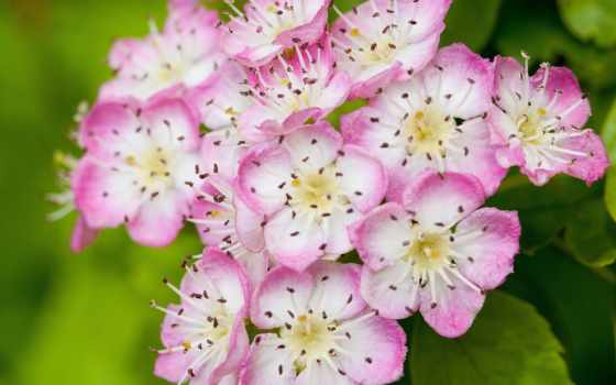 flowers, toyota, wallpaperz Фон № 70962 разрешение 2560x1600