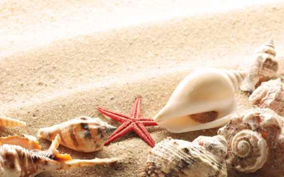 ракушки, песок, summer