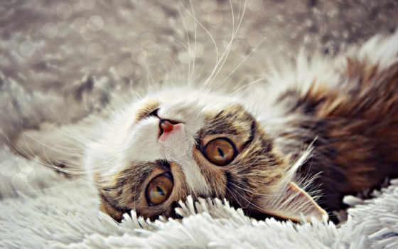 кота, life, без